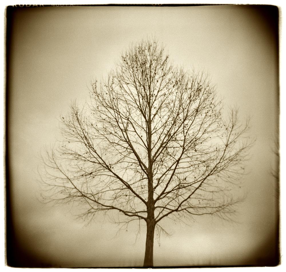 """Tree Study"" H1510"