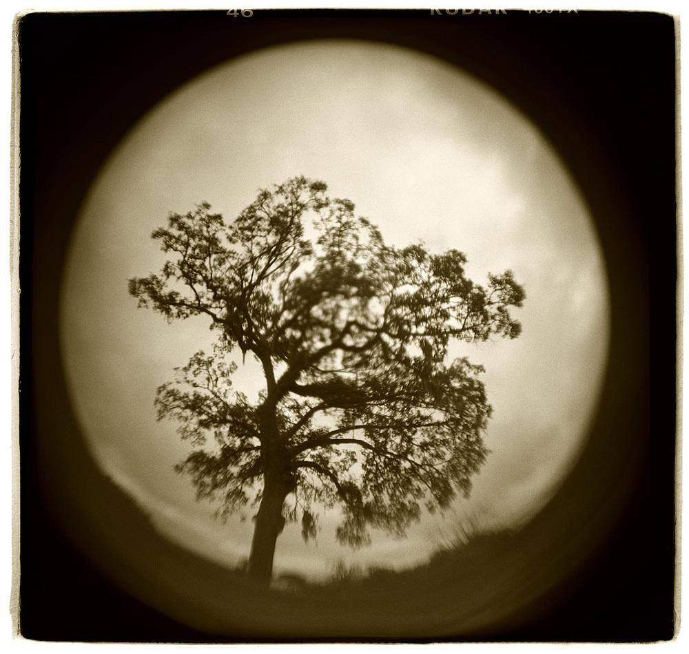 """Tree Study"" H1512"