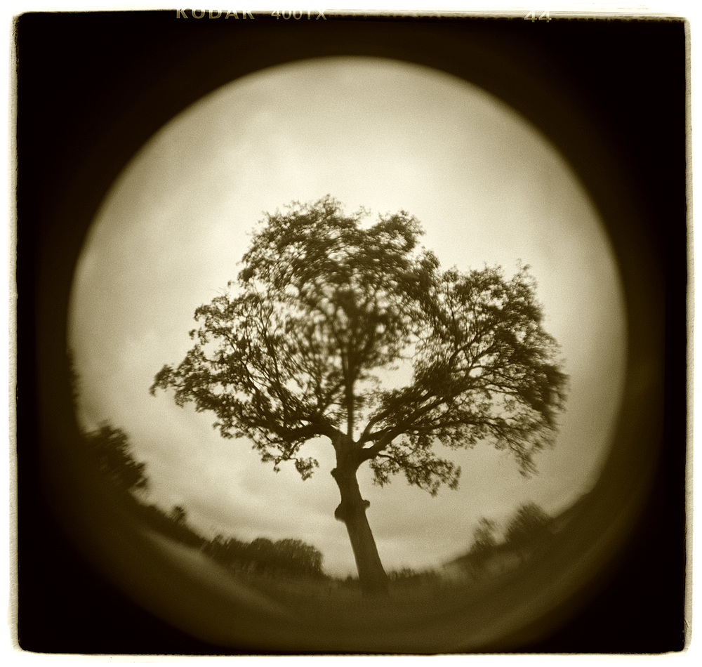 """Tree Study"" H1513"