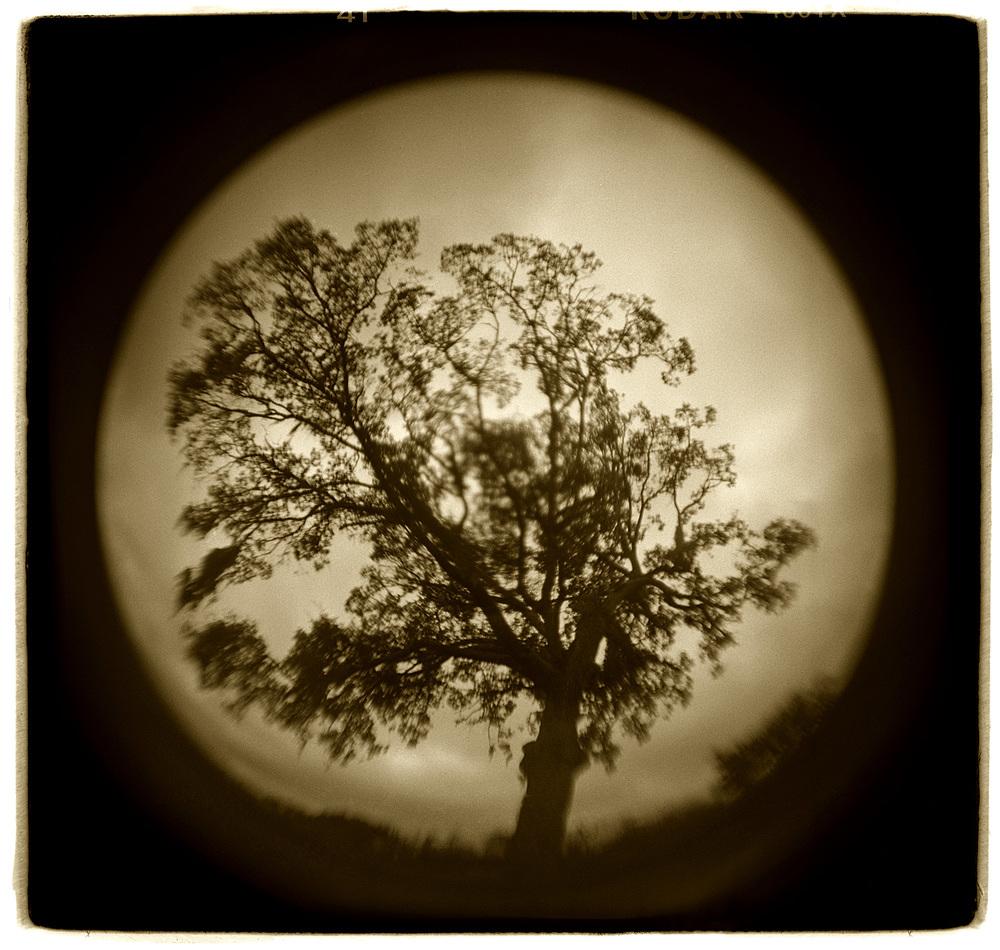 """Tree Study"" H1514"