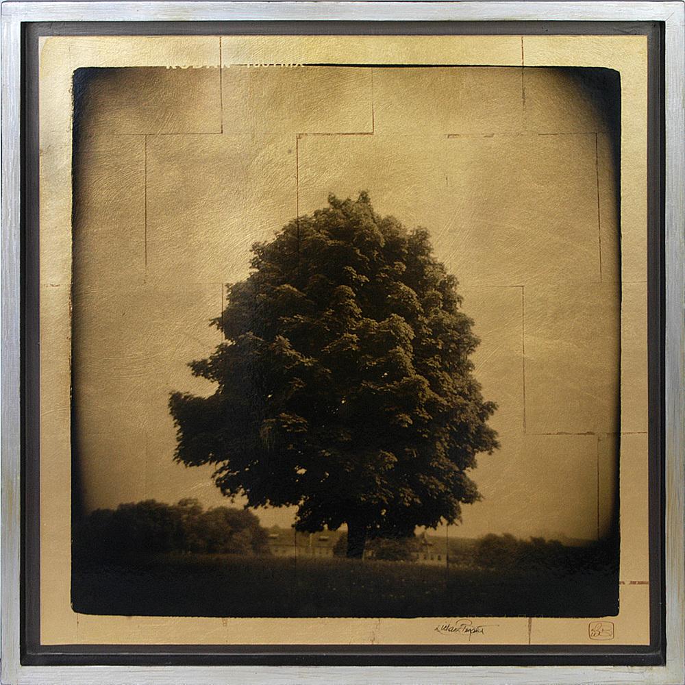 """Tree Study"" 25""x25"" FW06 $695"
