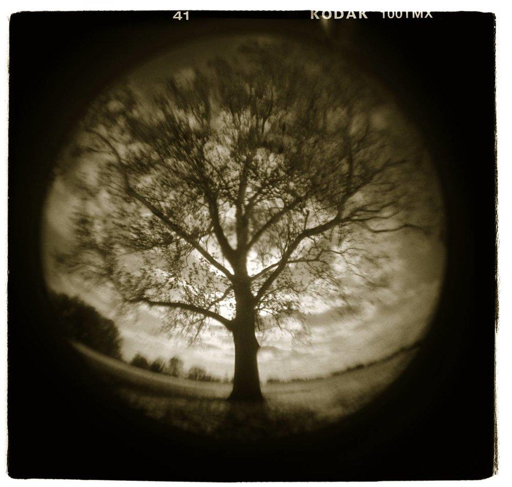 """Tree Study"" H1807"