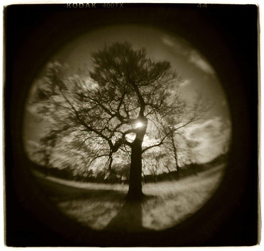 """Tree Study"" H1808"