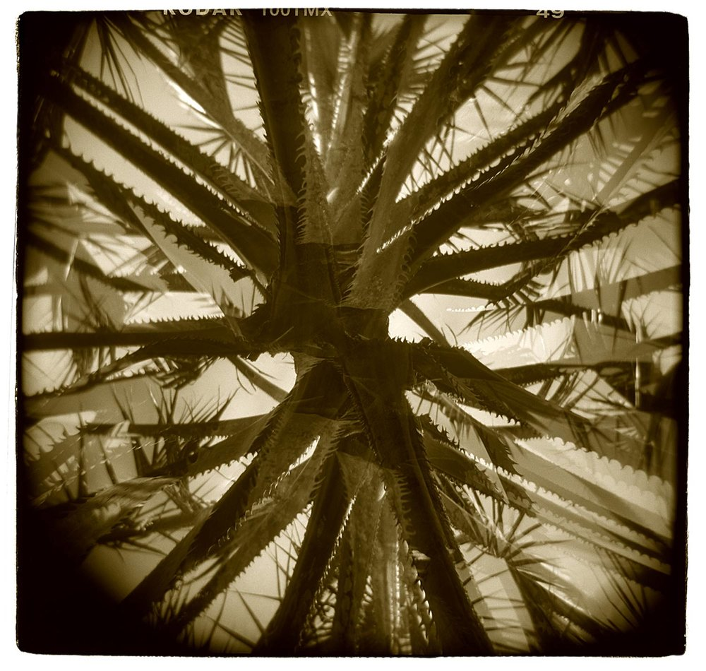 """Palm Study"" (Double Exposure) H1804"