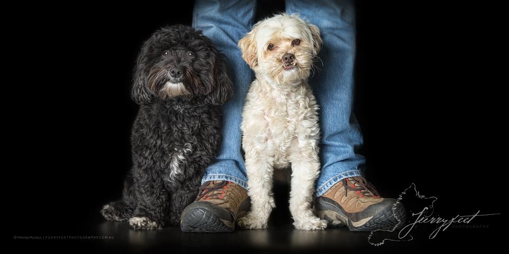 ©mmurzecki-FurryFeetPhotography-Jimmy&Harvey