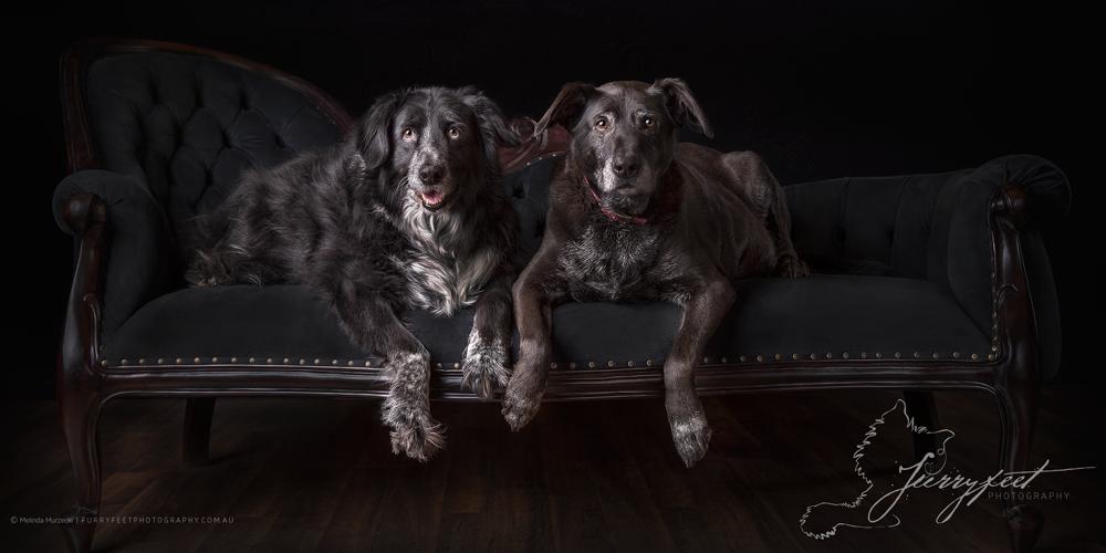 ©mmurzecki-FurryFeetPhotography- Spike&Harriet
