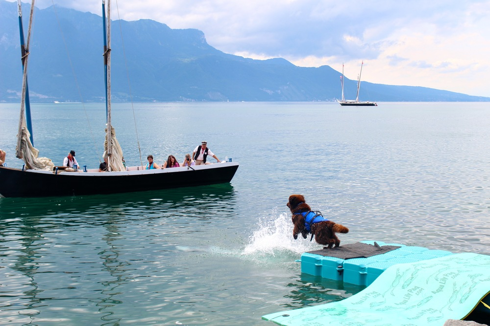 Vevey.  Apparently dogs that jump off docks and pull boats to shore is a thing here?