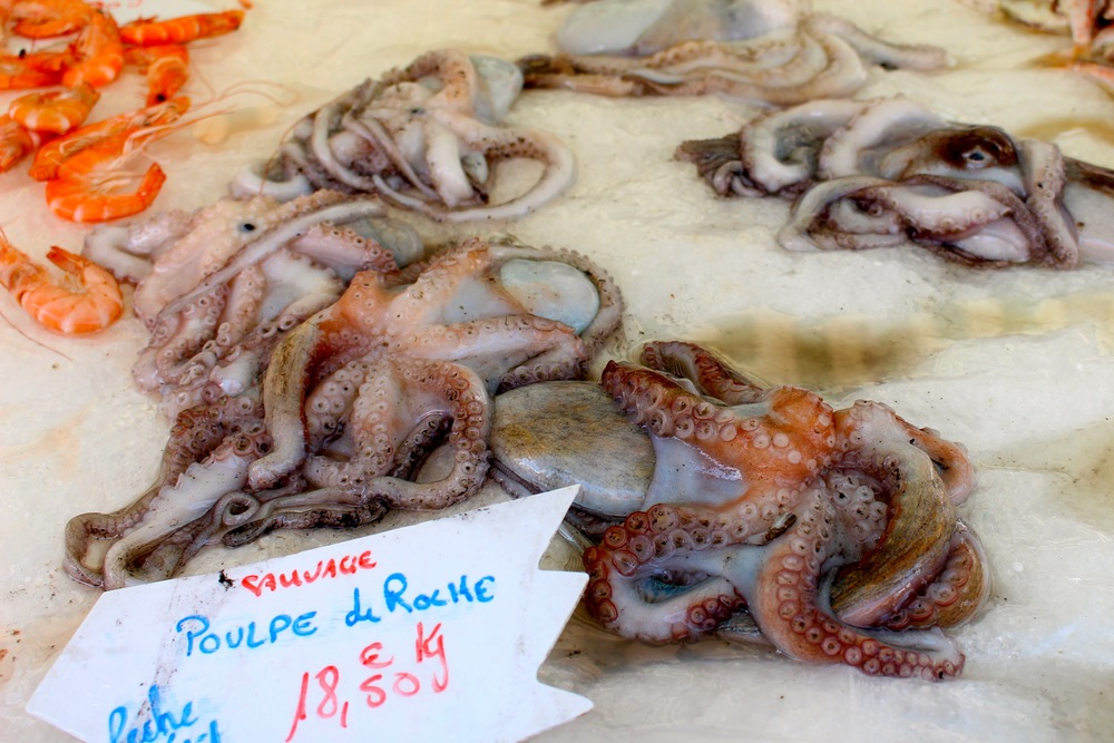 Octopus in Nice, France