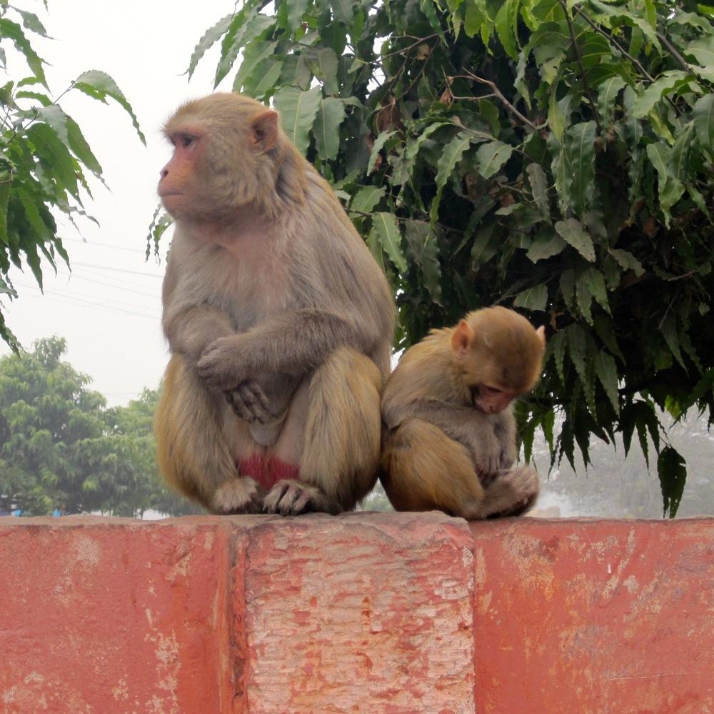 monkey friends.jpg