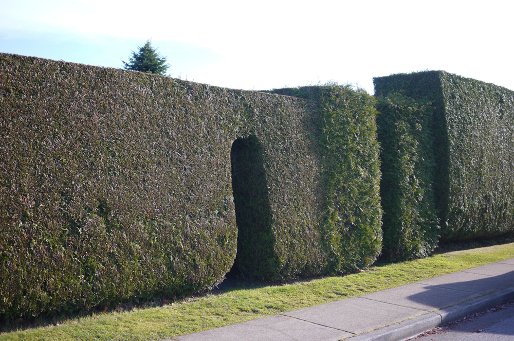 hedge3.png