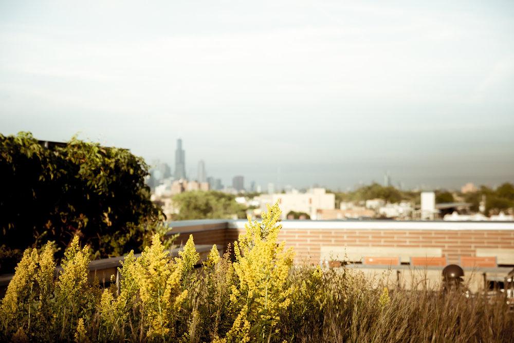 skyline_terrace3.jpg