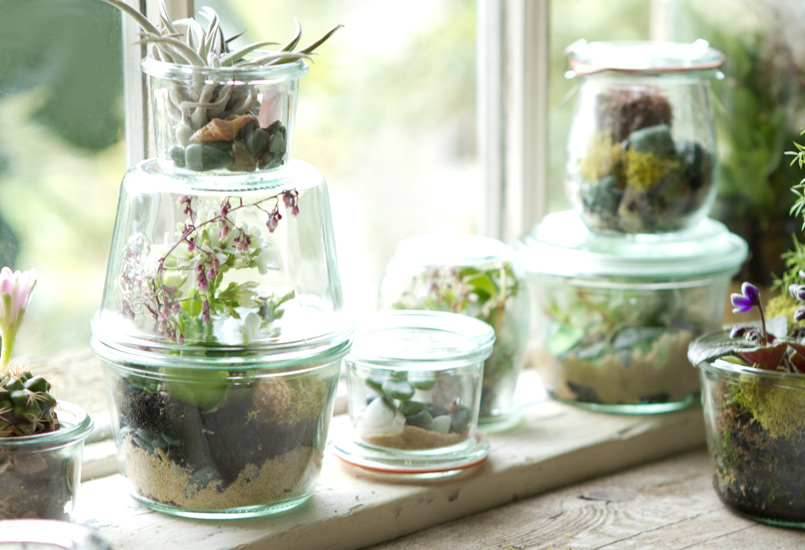 Tiny Weck jar terrariums