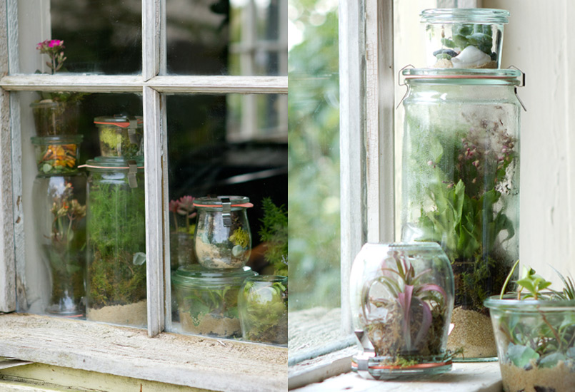 Weck jar terrarium in window