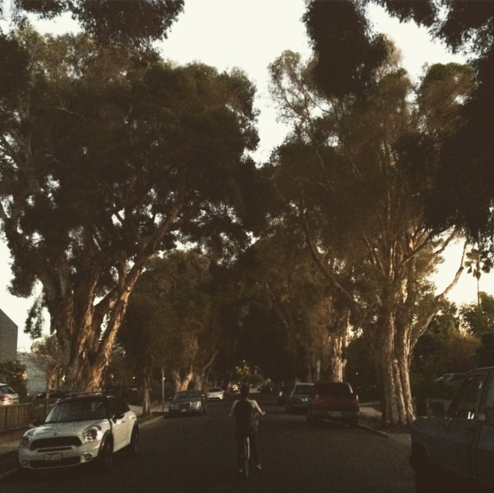 Bike Riding - Venice, CA