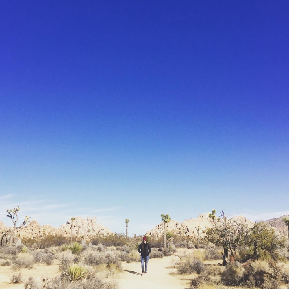 Joshua Tree National Park - Joshua Tree, CA