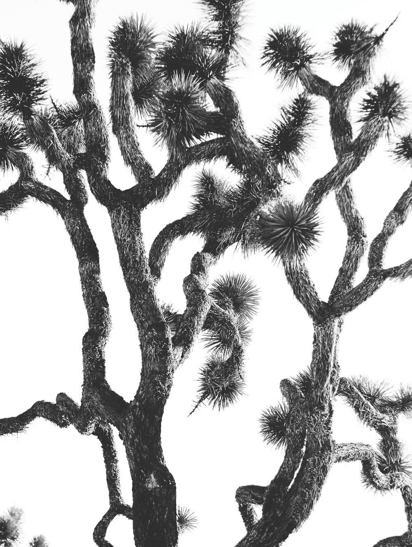 jtree-1.jpg