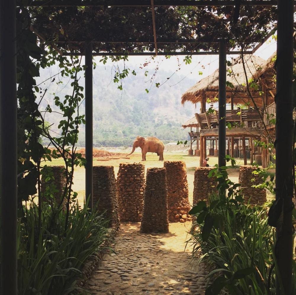 Elephant Nature Park - Chiang Mai, Thailand