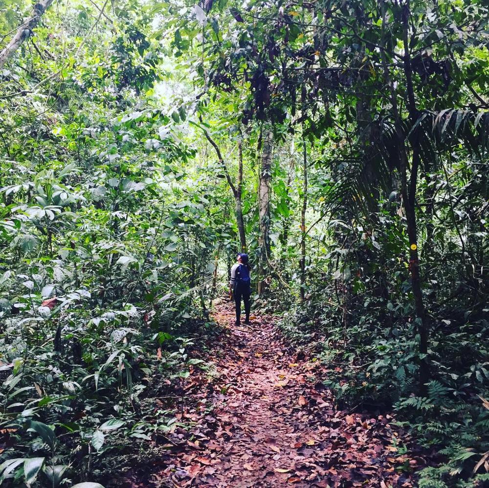 The Amazon Jungle - Amazon Planet,Peru