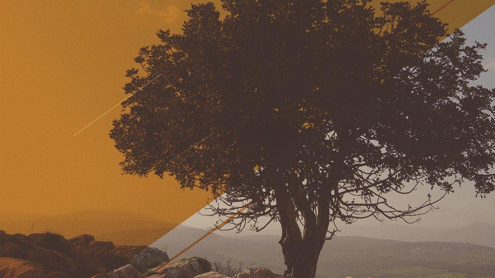 Tree Background.jpg