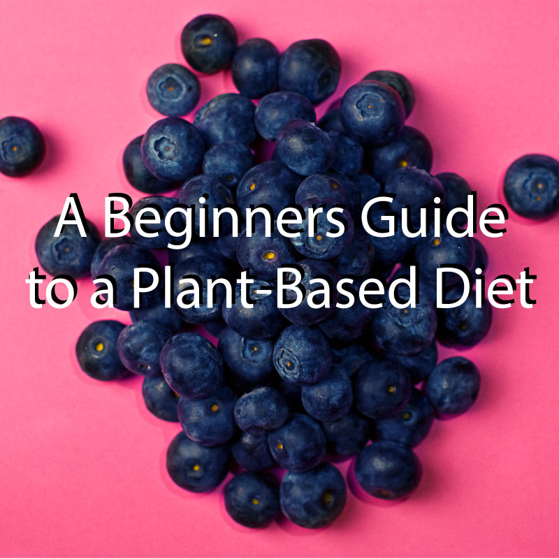 This article talks about the basics of how to transition to a plant based diet. It highlights my conversational, yet informative tone, and uses beautiful imagery to drive the point home.