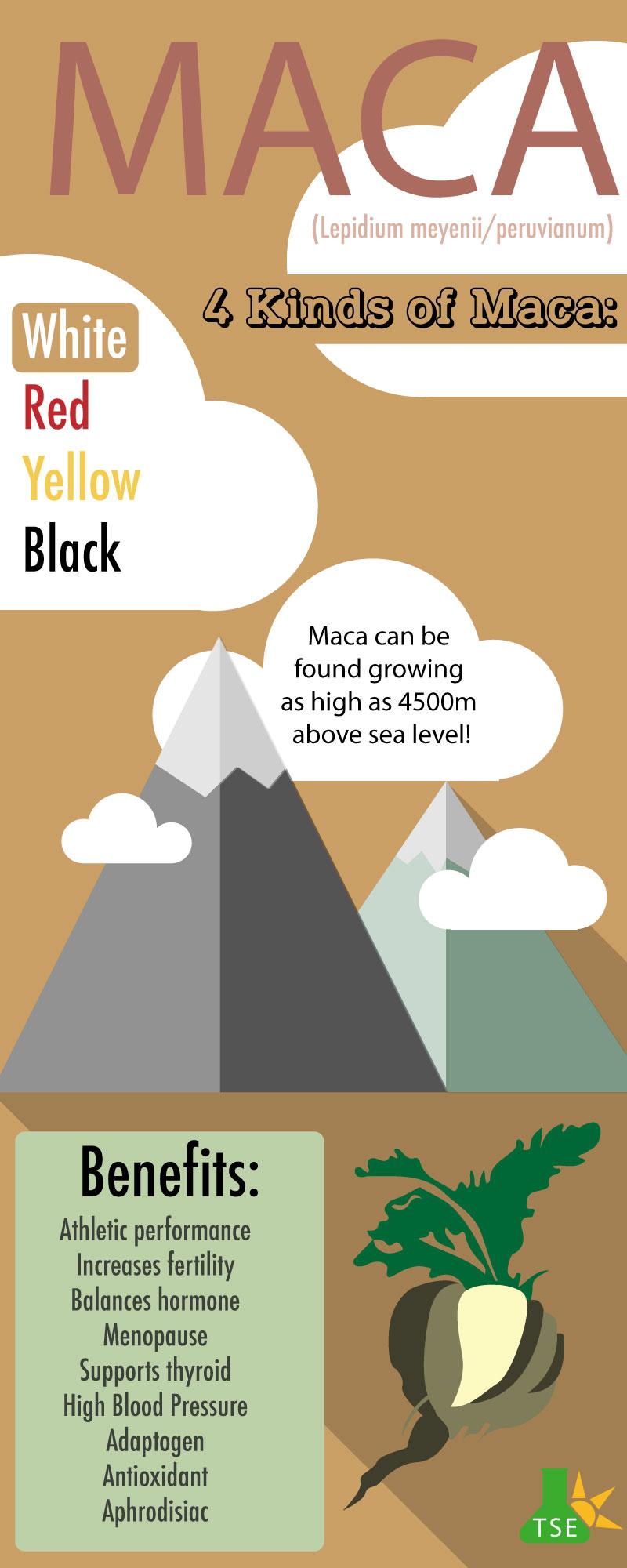 Maca lepidium meyenii infographic