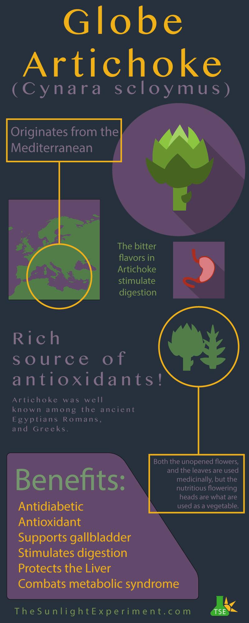 Globe Artichoke Infographic