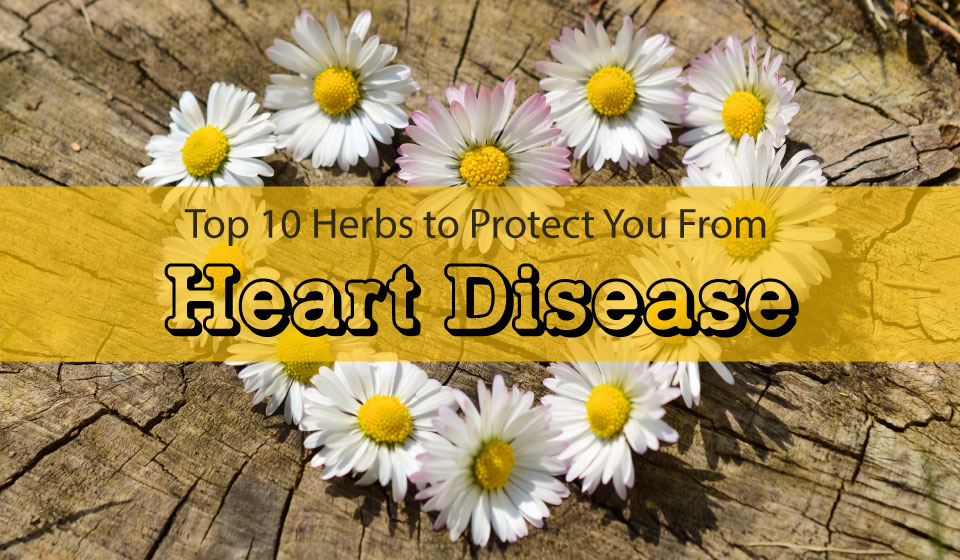 Top 10 herbs for heart health