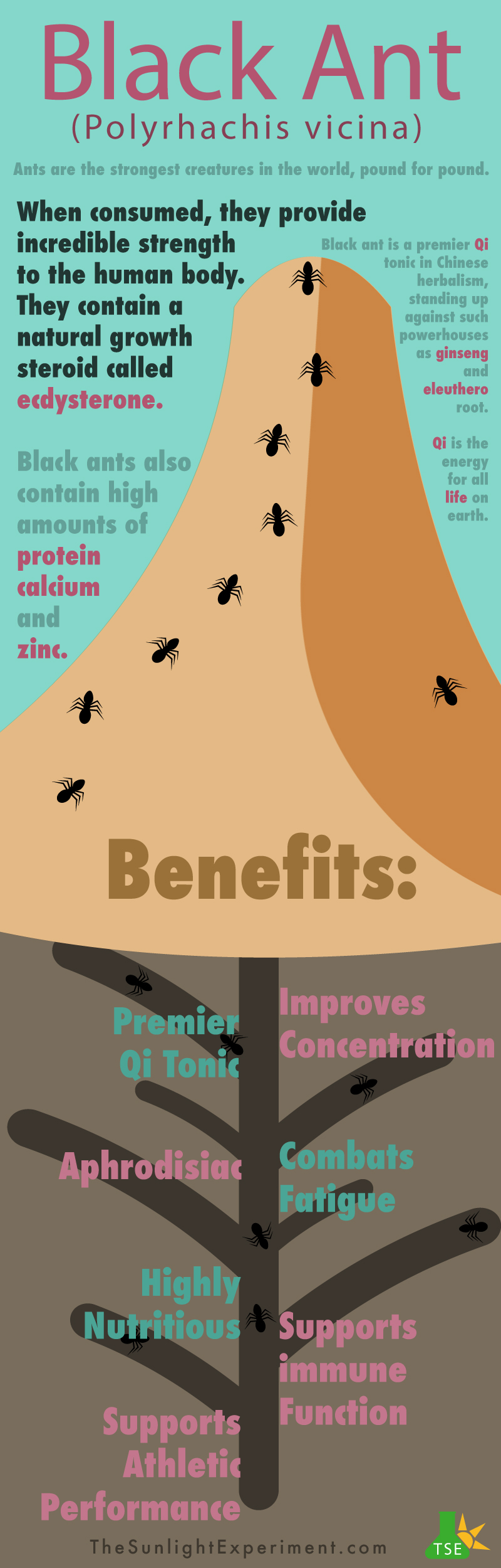 Black ant infographic
