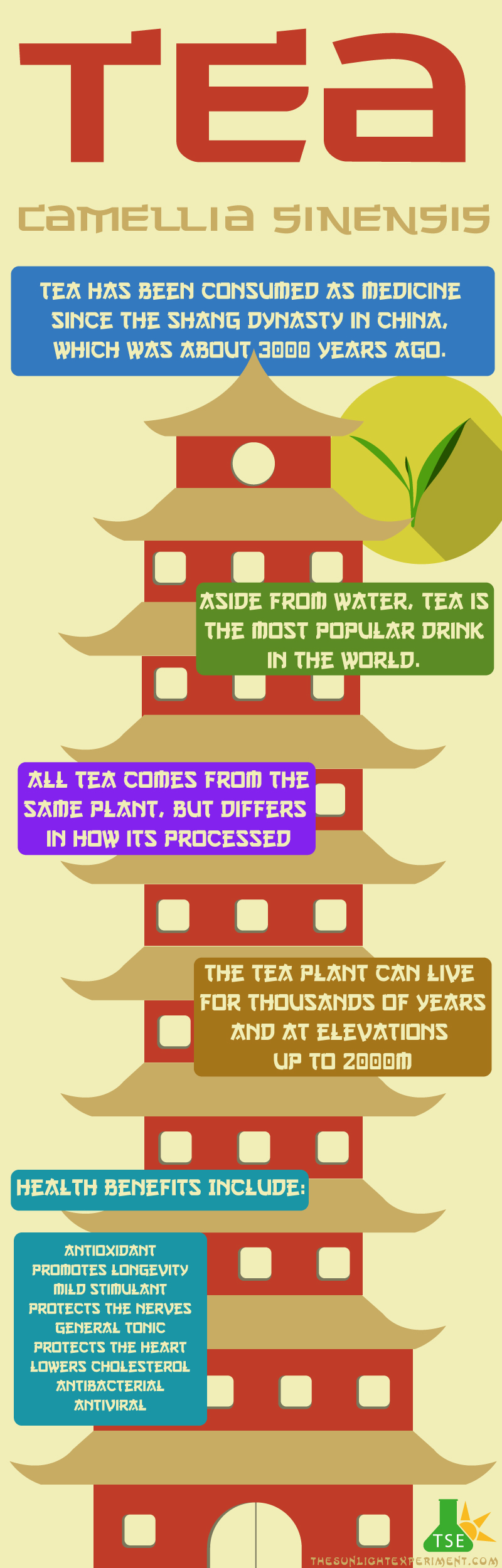 Tea infographic