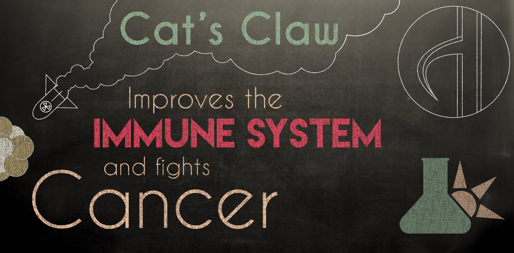 Cats claw and the immune system
