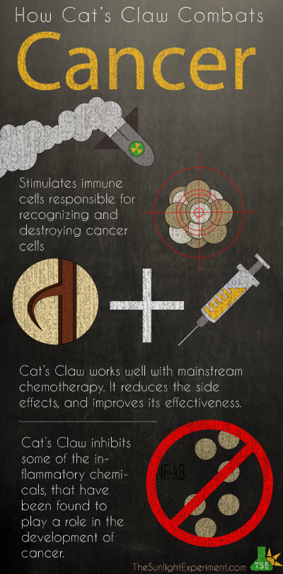 Some ways cats claw can prevent or treat cancer