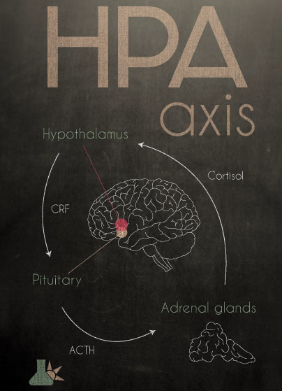Adaptogens and the HPA axis