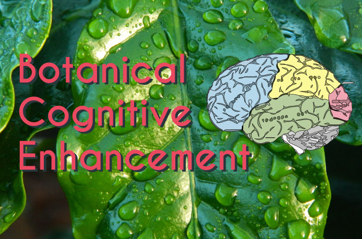 Botanical cognitive enhancement nootropics