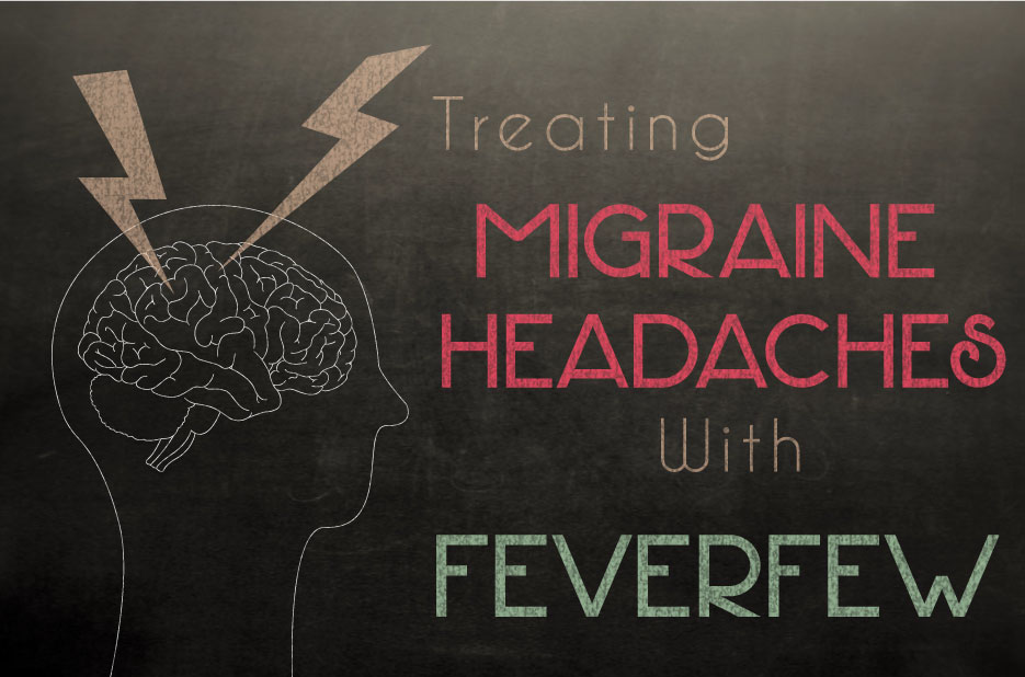 Feverfew for treating migraine headaches