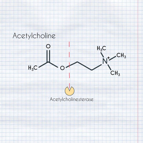 Acetylcholine alzheimers