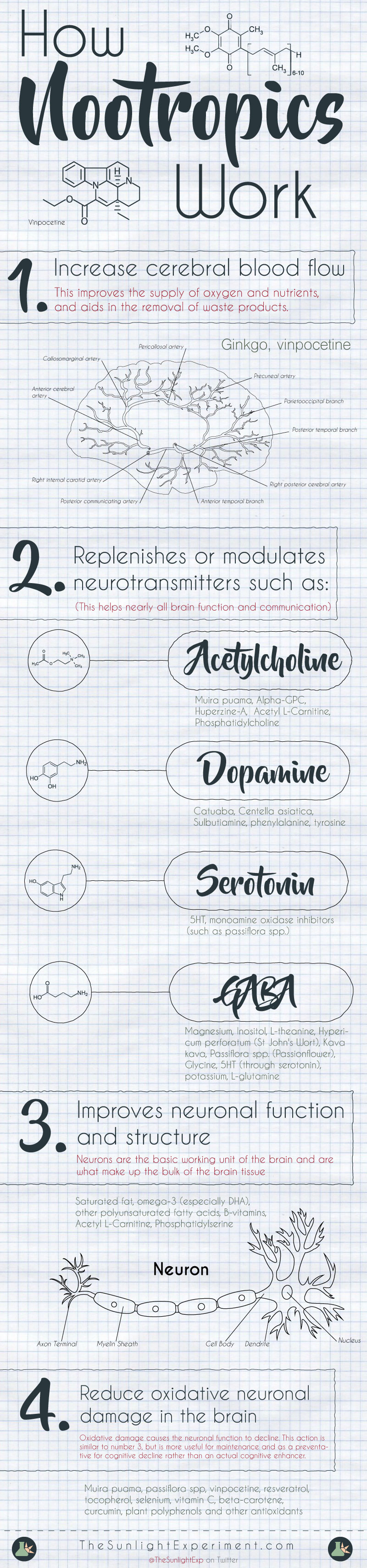 How nootropics work infographic