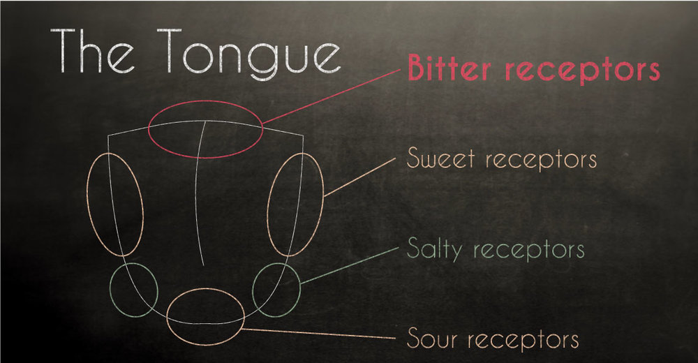 Bitter receptors on the tongue