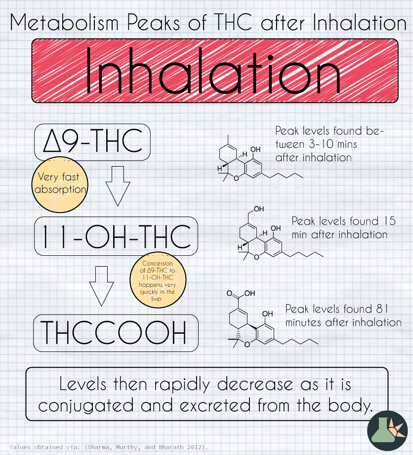 THC metabolism inhalation