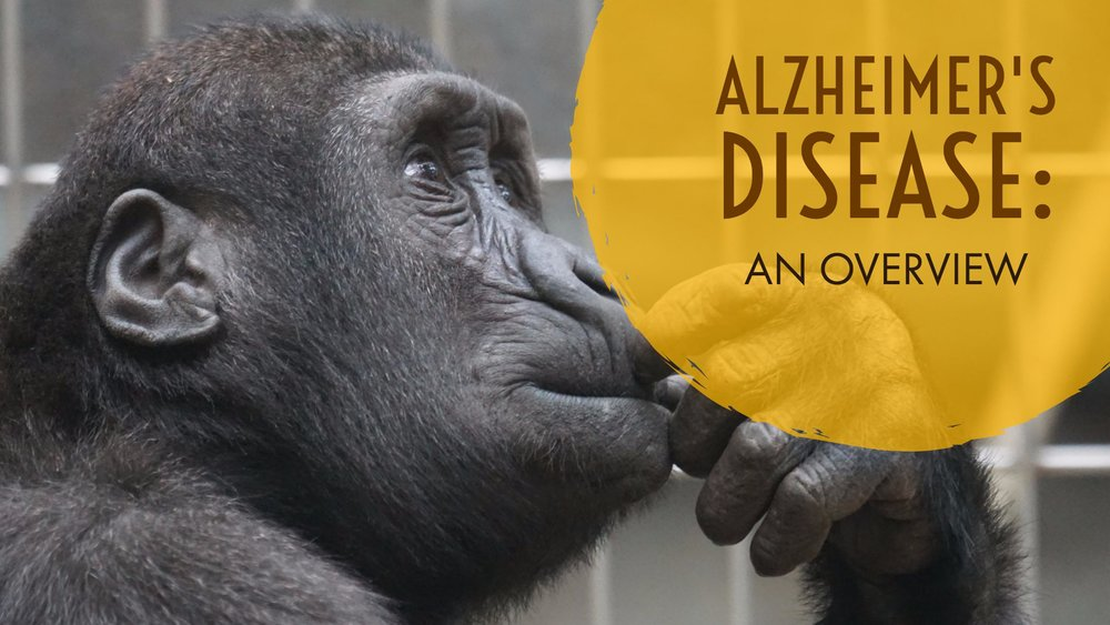 Alzheimers disease overview