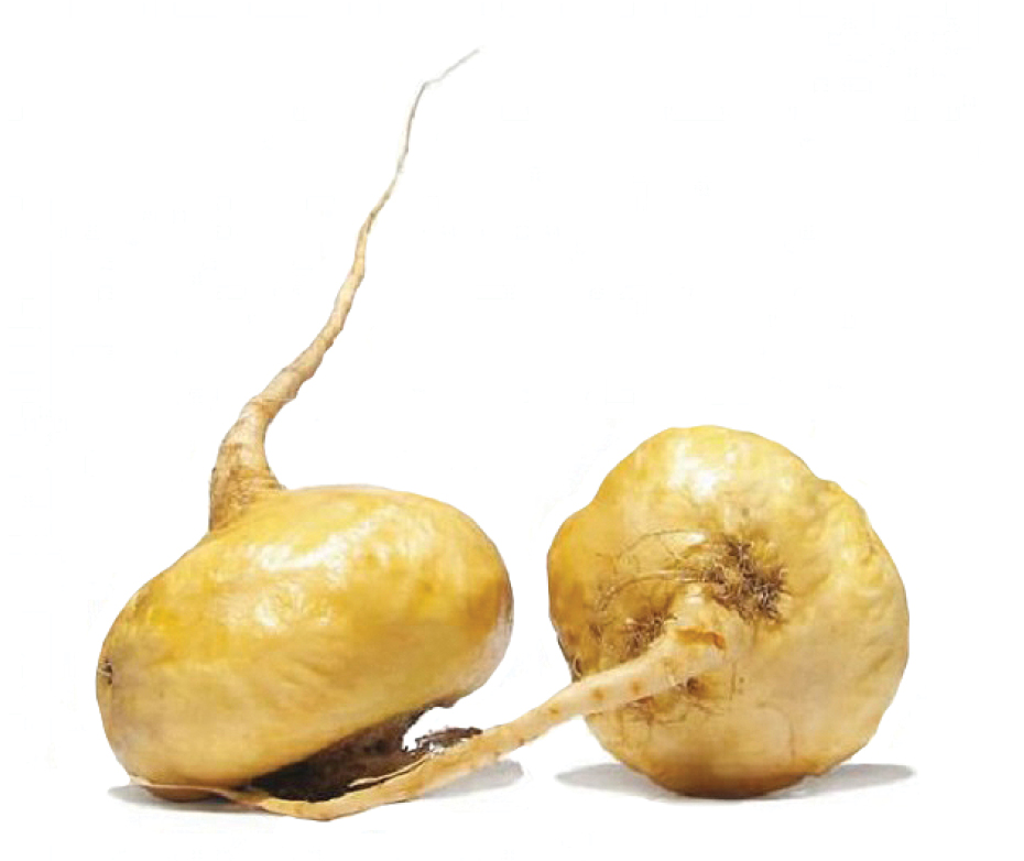 maca root lepidium meyenii