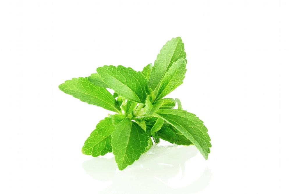 stevia rebaudiana monograph