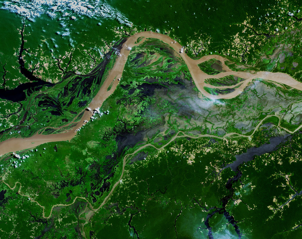 Amazon rainforest habitat from above