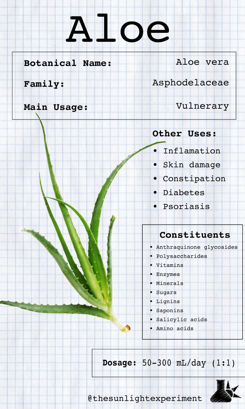 Aloe vera infographic