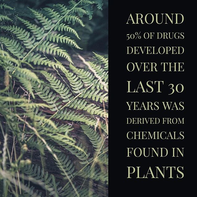 Many of the drugs used today in medicine were derived from chemicals that were originally discovered in plants. Finding new drugs will rely heavily on our understanding of plant chemistry. #drugs #pharmaceutical #research