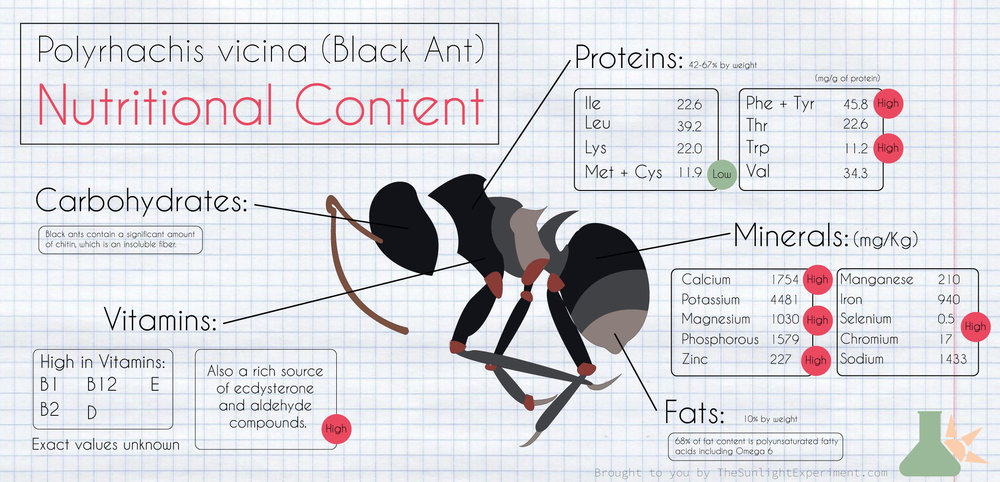 the nutritional profile of black ant
