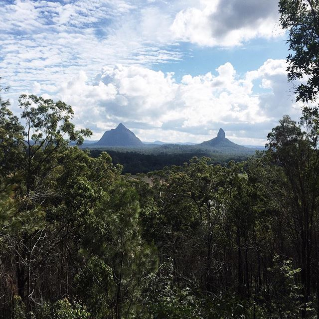 Headed out to the #glasshouse mountains in #queensland #australia in search for the native Sambucus australasica (elder). The flowers and berries of this plant contain a slurry of chemicals that can inhibit viral replication of such viruses as influenza A and B. #herb #hiking #flu #influenza #health