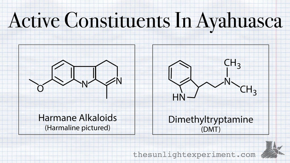 active ingredients in ayahuasca