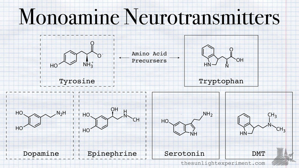 the monoamine neurotransmitters dmt