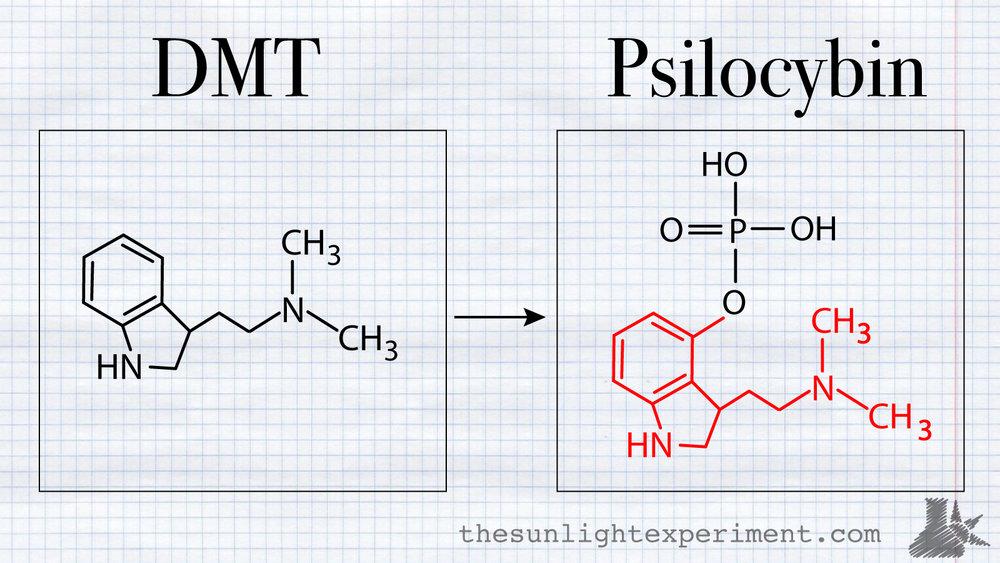 dmt vs psilocybin
