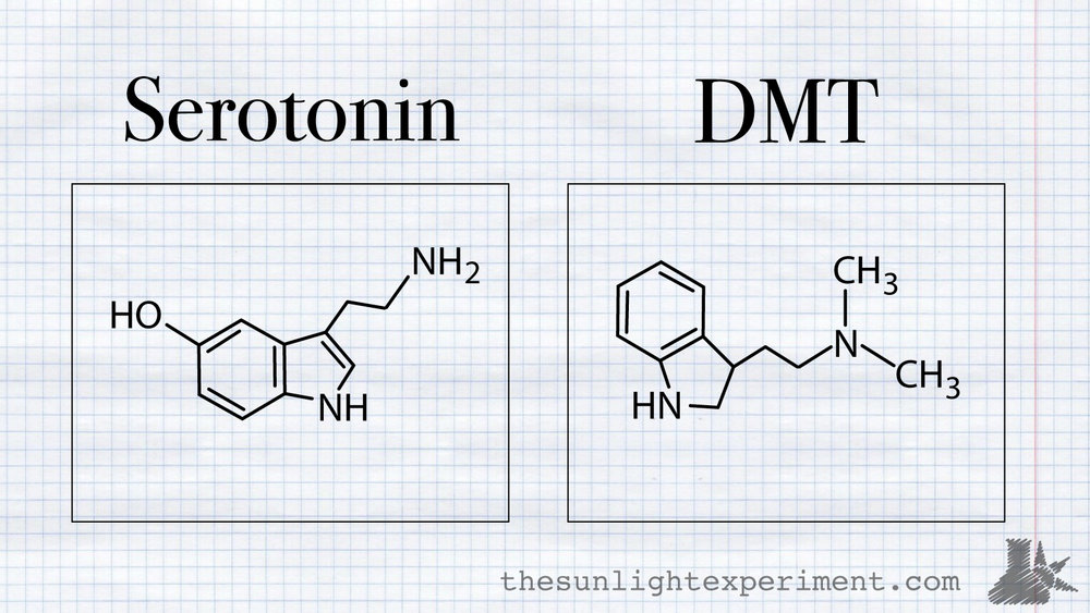 serotonin and dmt
